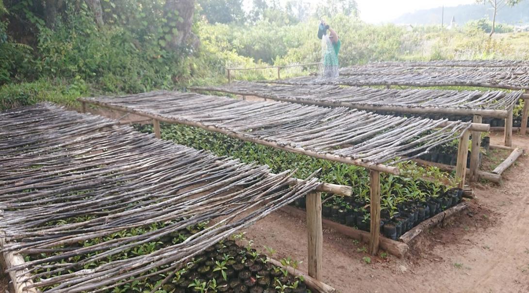 アフリカの島国マダガスカルで植林活動に取り組む環境保護ボランティア